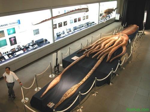 гигант кальмар
